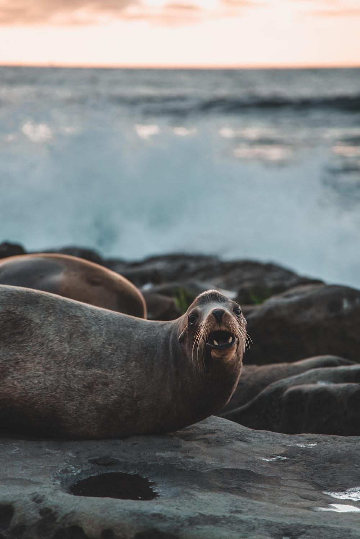 seal on rock during daytime