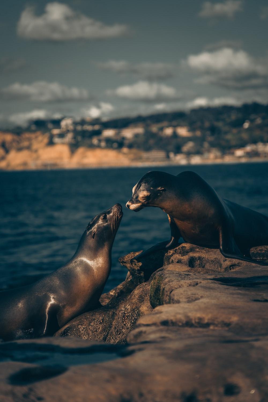 sea lion on brown rock during daytime