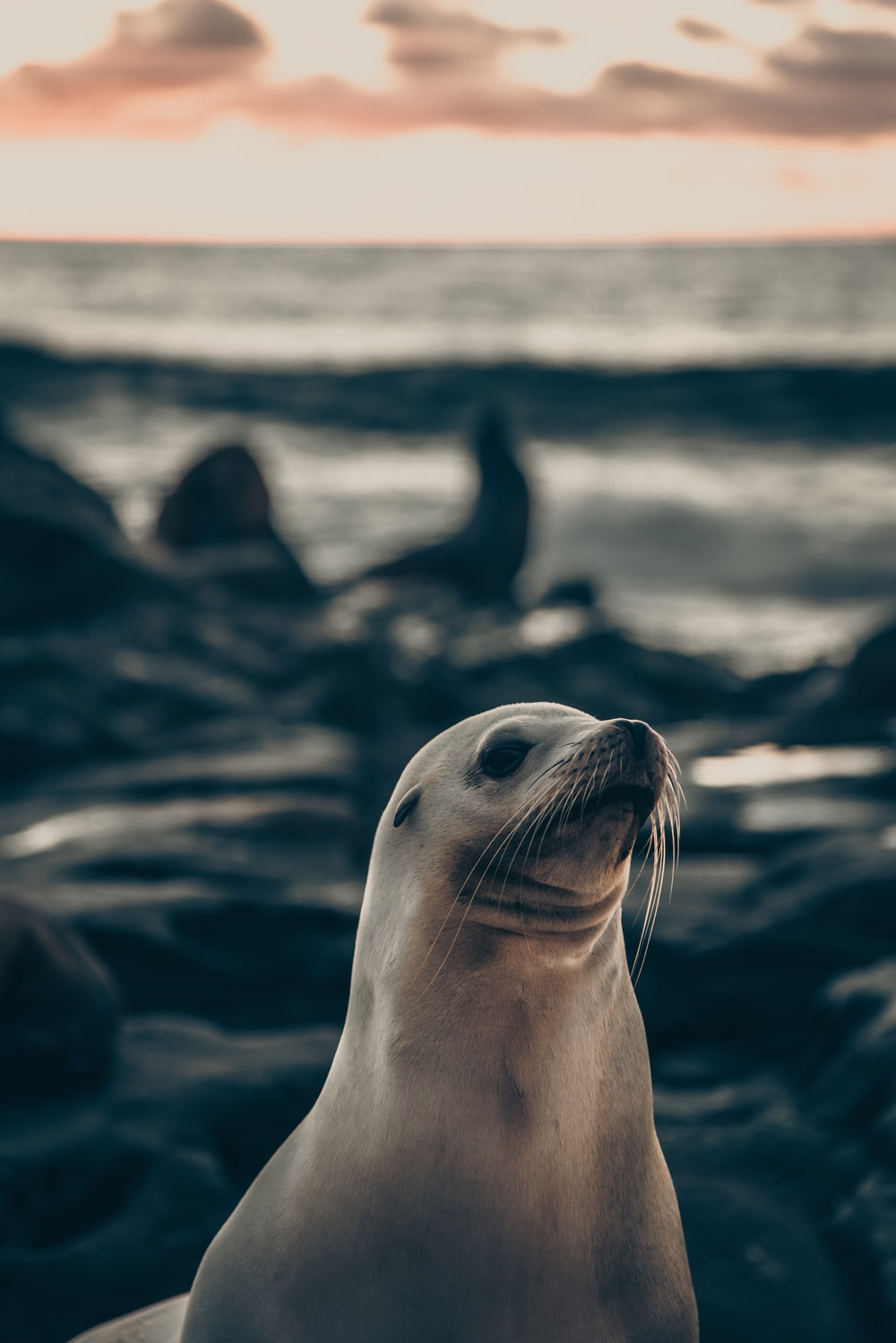 seal on rock in grayscale photography
