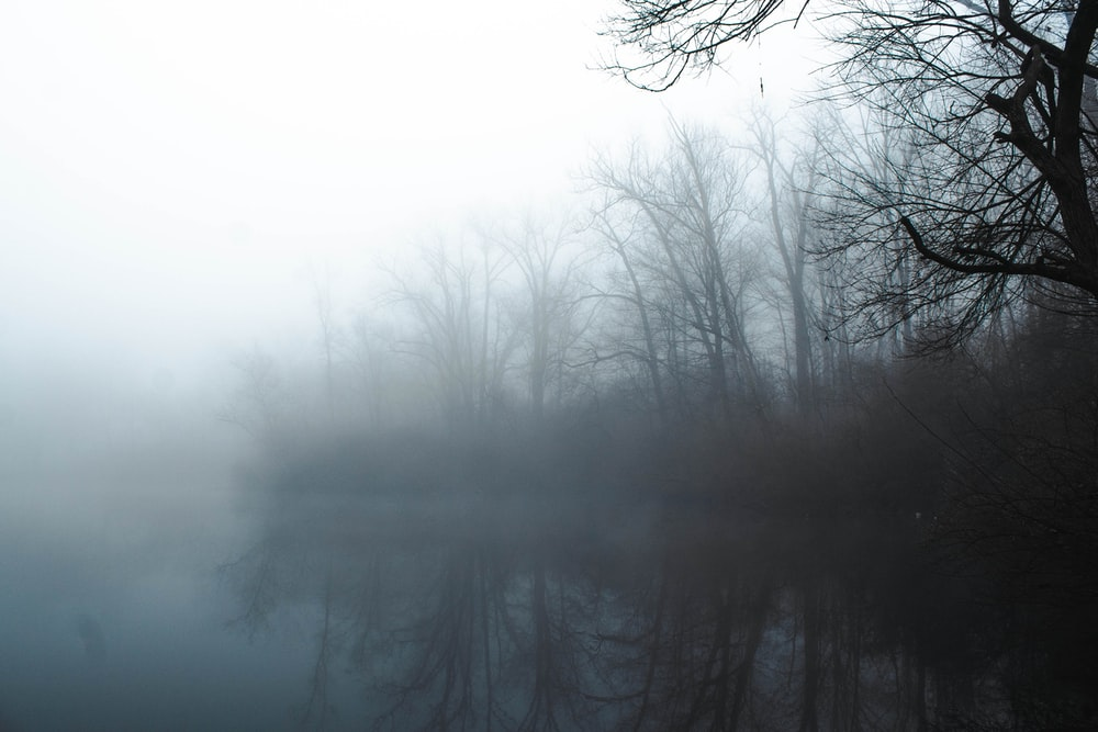 bare trees on foggy weather