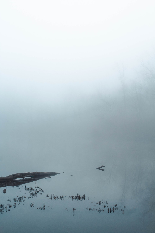 black bird flying over the fog