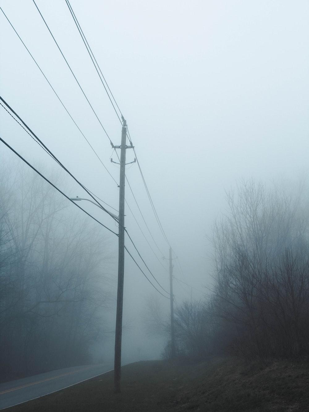 bare trees under gray sky