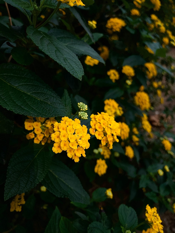 Flowers 🌼