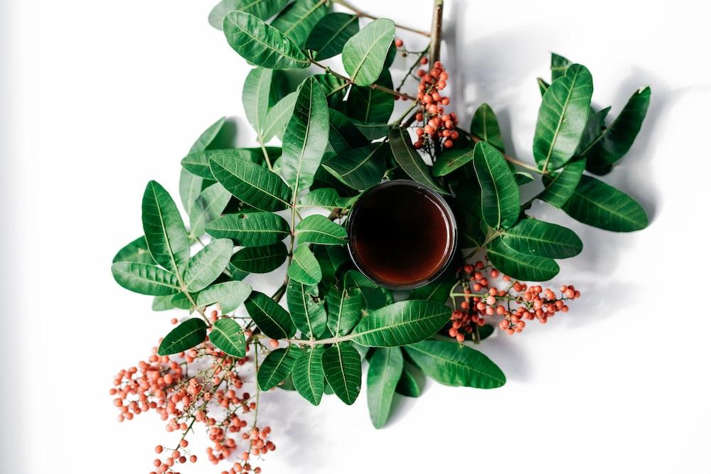 green leaves and brown ceramic mug