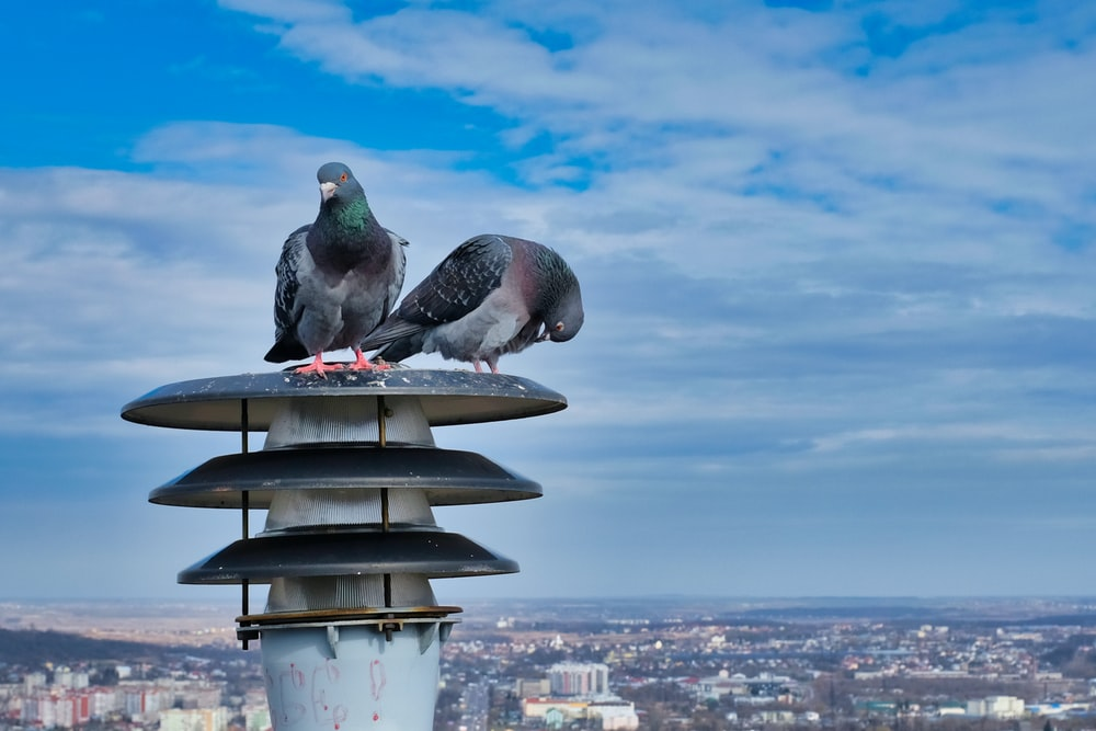 gray and white pigeon on white metal stand during daytime