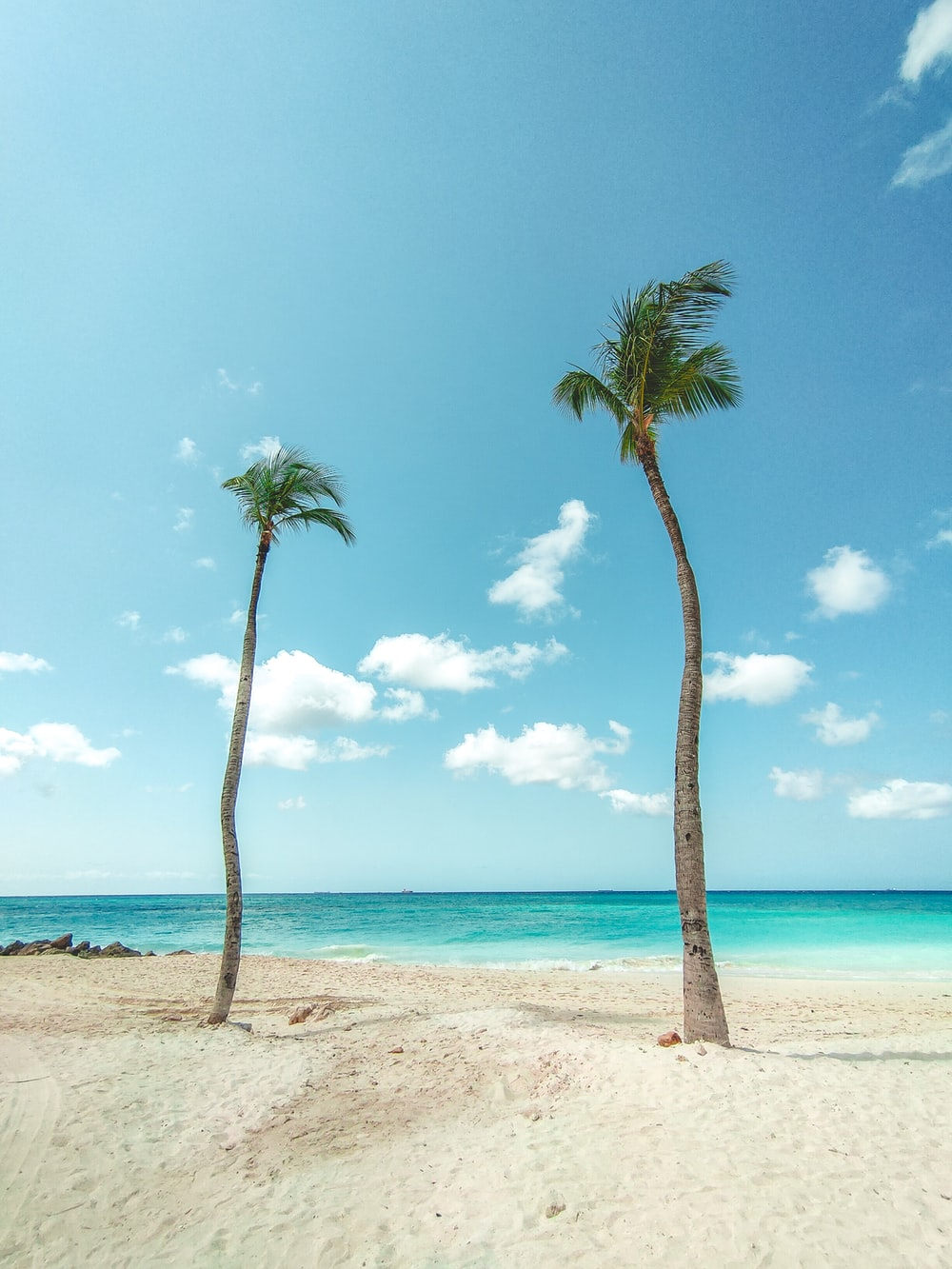 palm trees on beach during daytime
