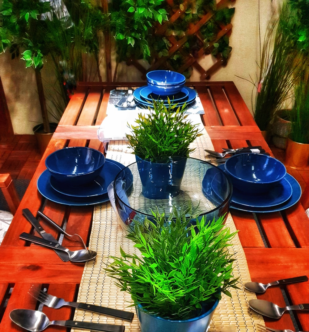 green plant on blue ceramic plate