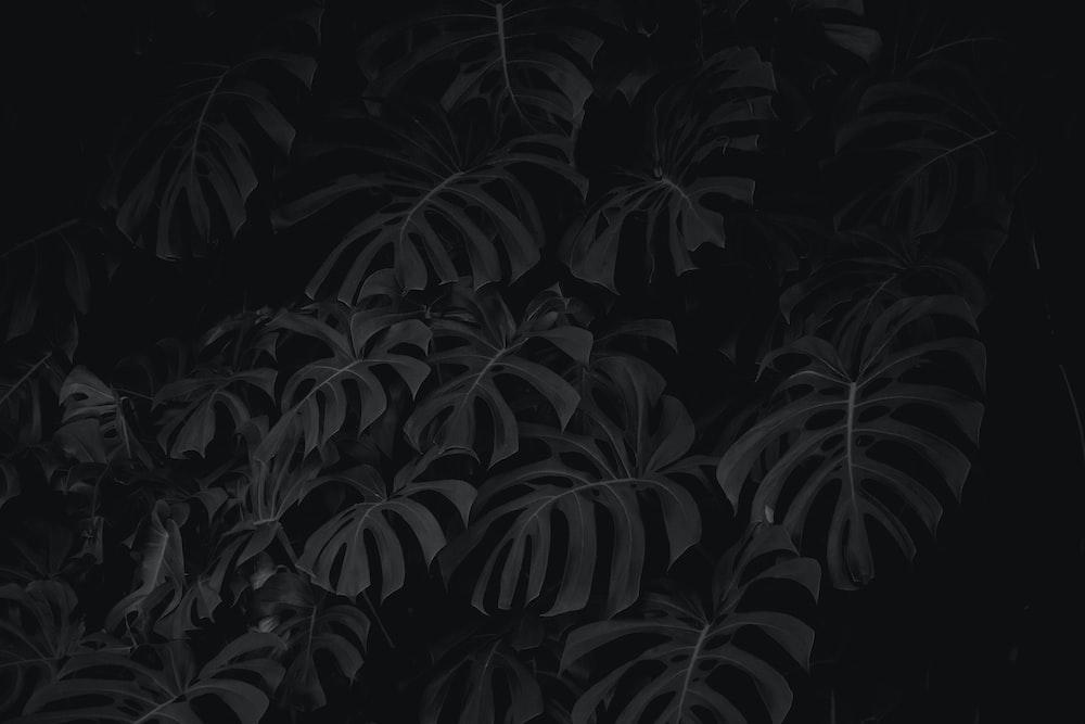 black and white leaf plant