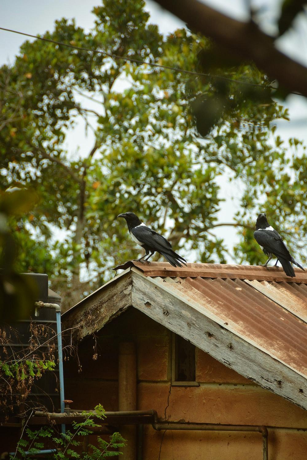black bird on brown wooden bird house during daytime