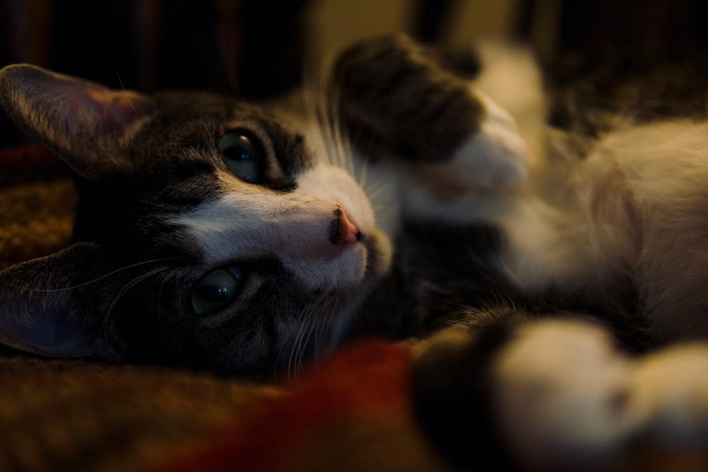 black and white cat lying on orange textile
