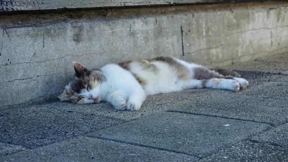 white and black cat lying on gray concrete floor