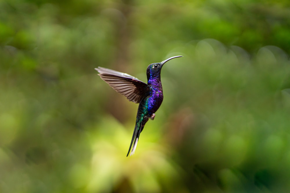 blue and green humming bird flying during daytime