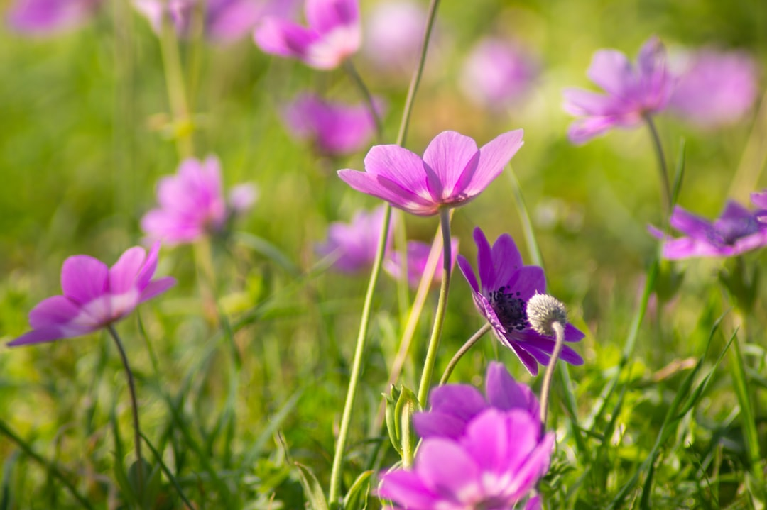 Flowers, Purple, Spring