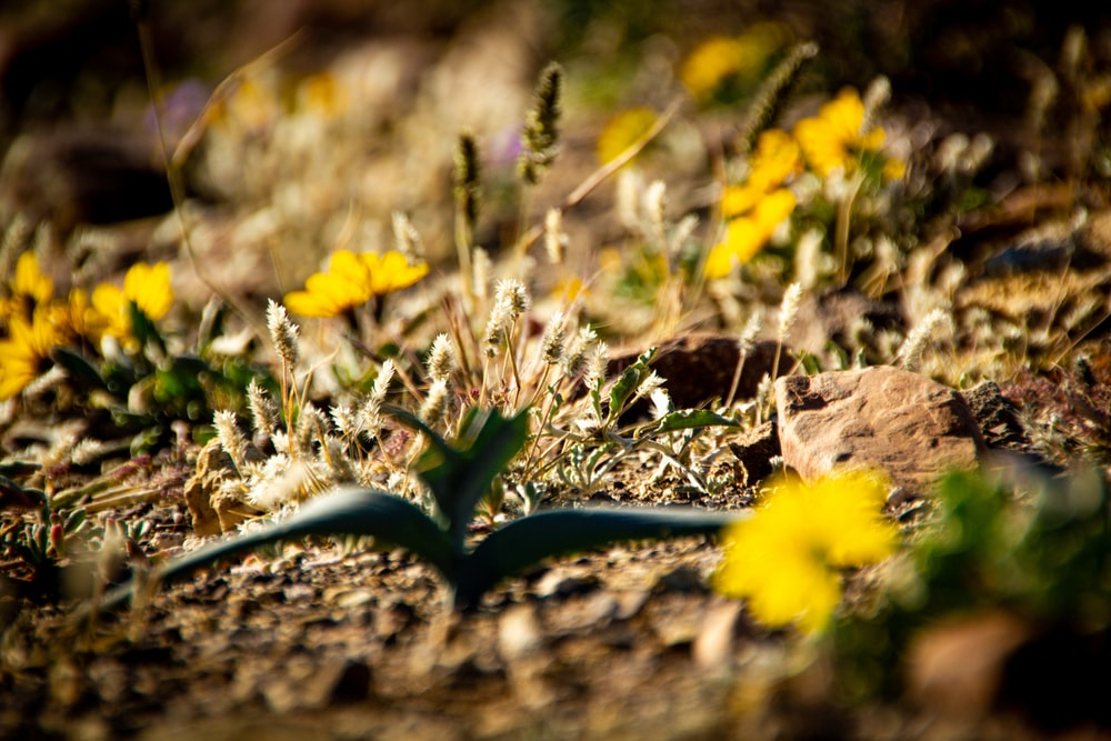 yellow flowers on brown soil