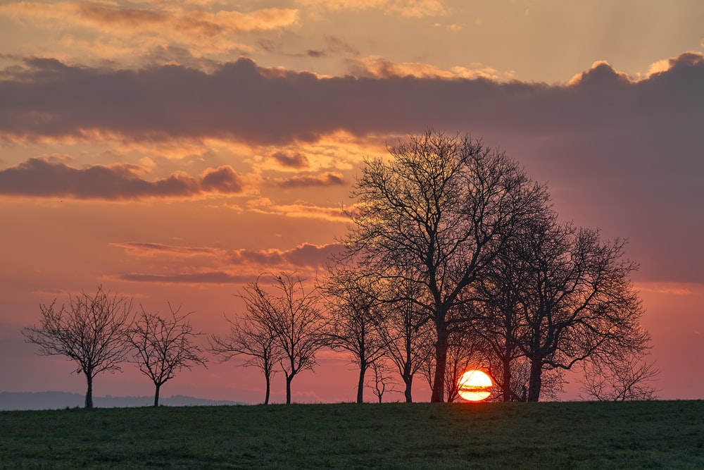 bare trees on green grass field during sunset