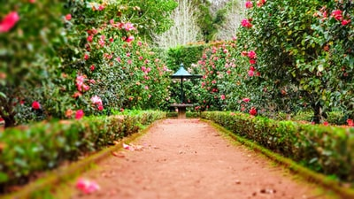 A table in the middle of the Garden. Rose flowers and pink flowers spread through the garden.