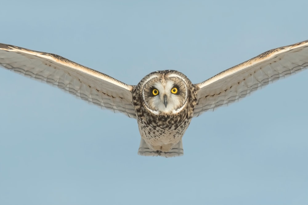 white and brown owl flying