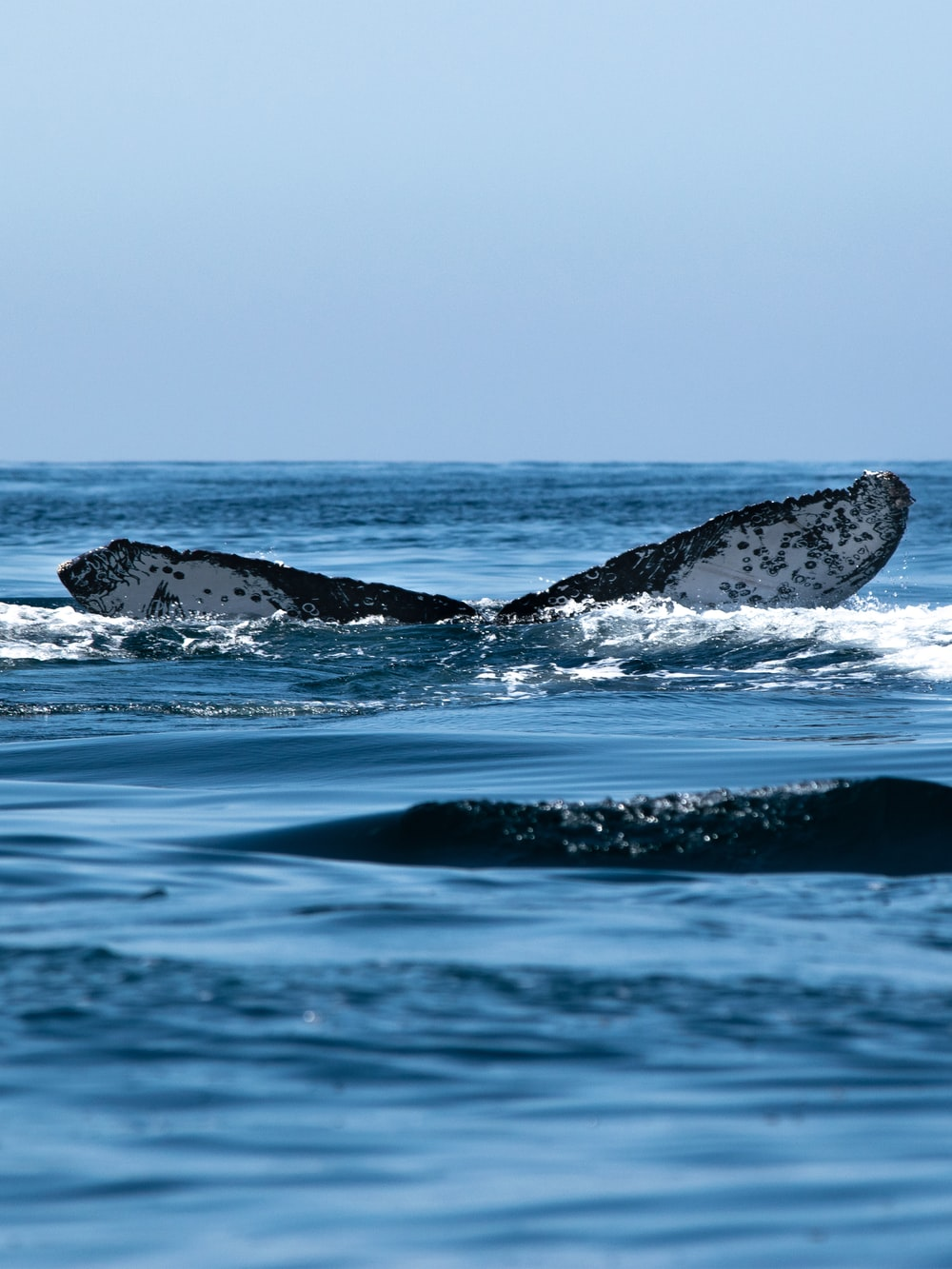 black and white whale on blue sea during daytime
