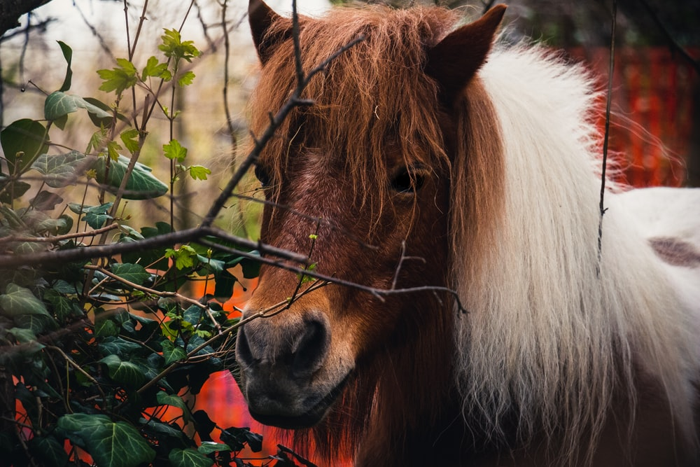 brown and white horse eating green leaves during daytime