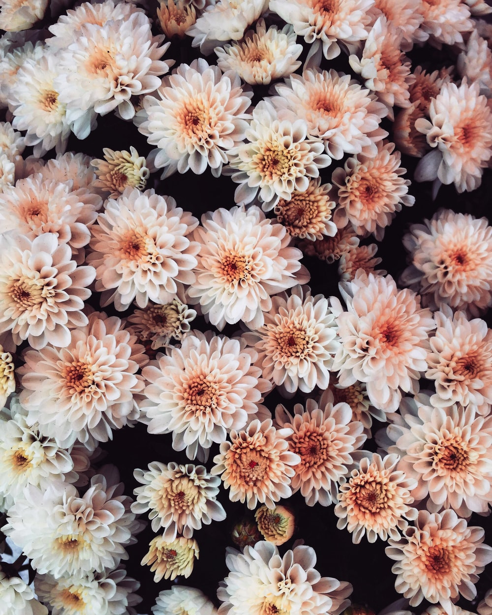 white and brown flowers in close up photography