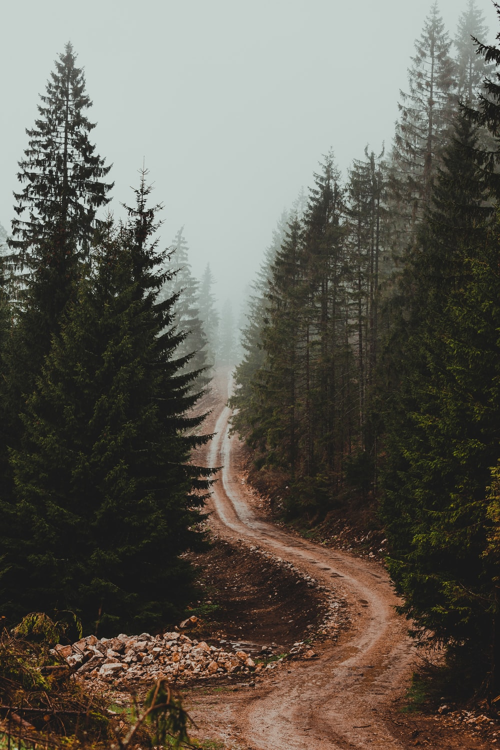 brown dirt road between green trees during foggy day