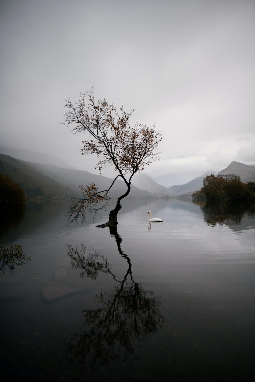 bare tree on lake during daytime
