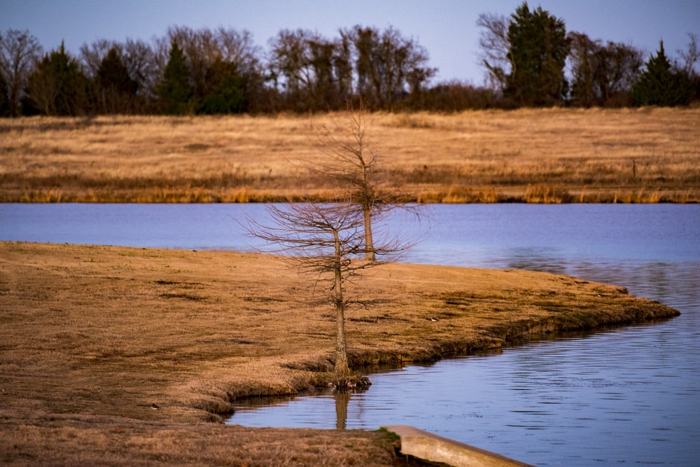 brown leafless tree on brown field beside river during daytime