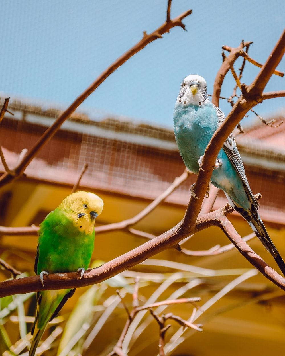 two green and yellow birds on brown tree branch
