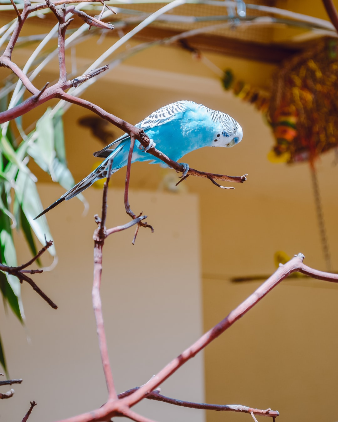 Feeding time at the Budgie House at Pt. Defiance Zoo