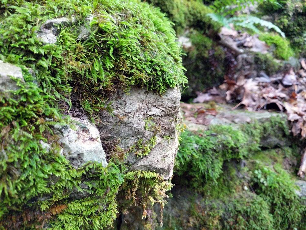 green moss on gray rock