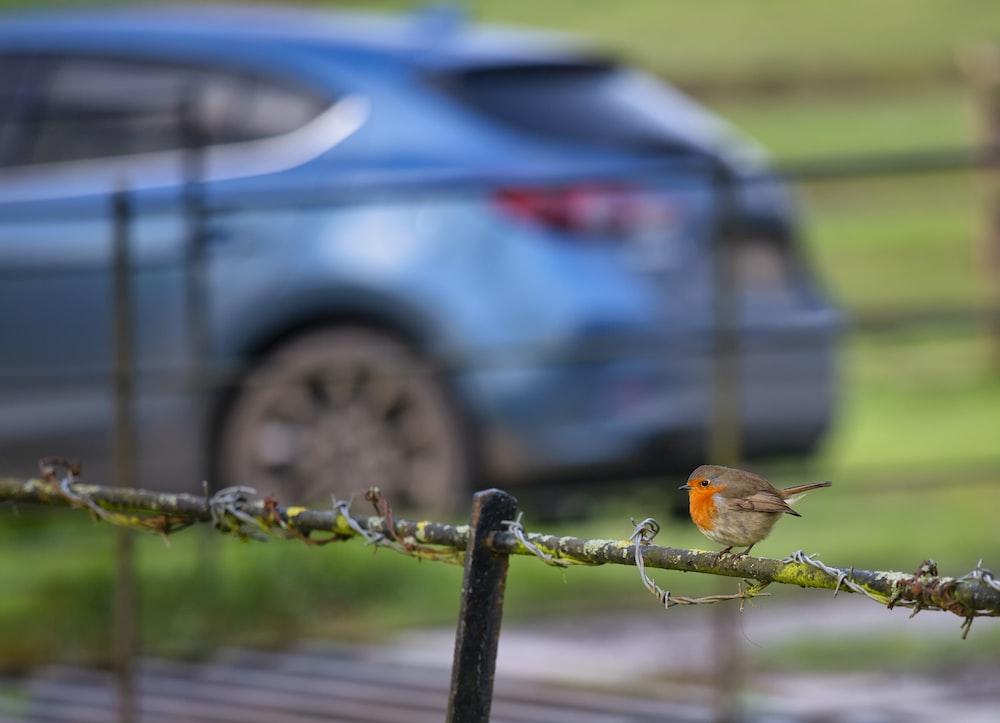 brown bird on black metal fence during daytime