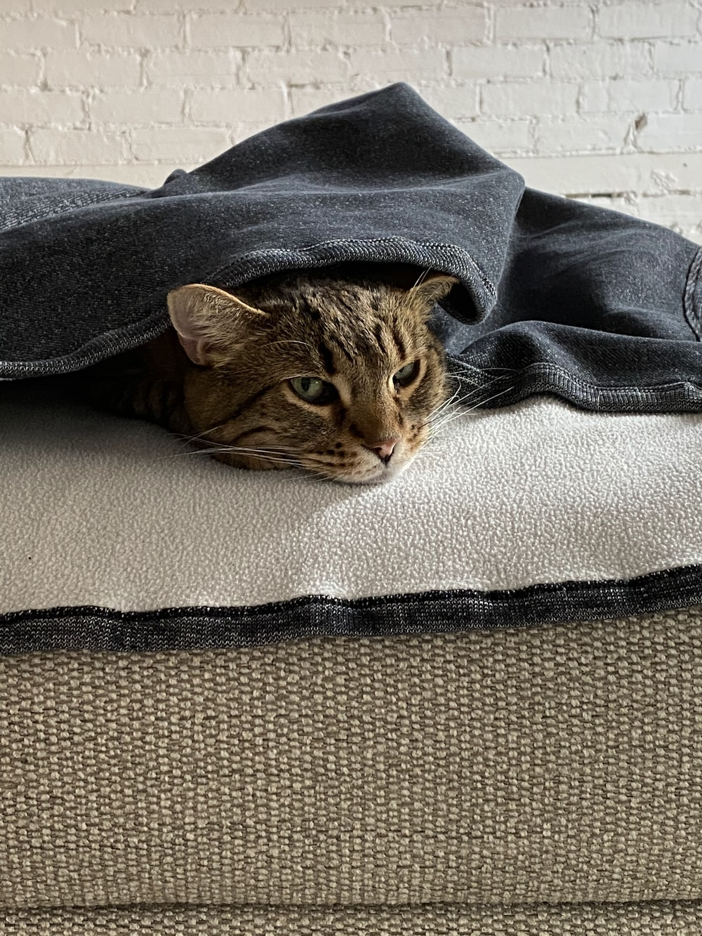 brown tabby cat on gray textile