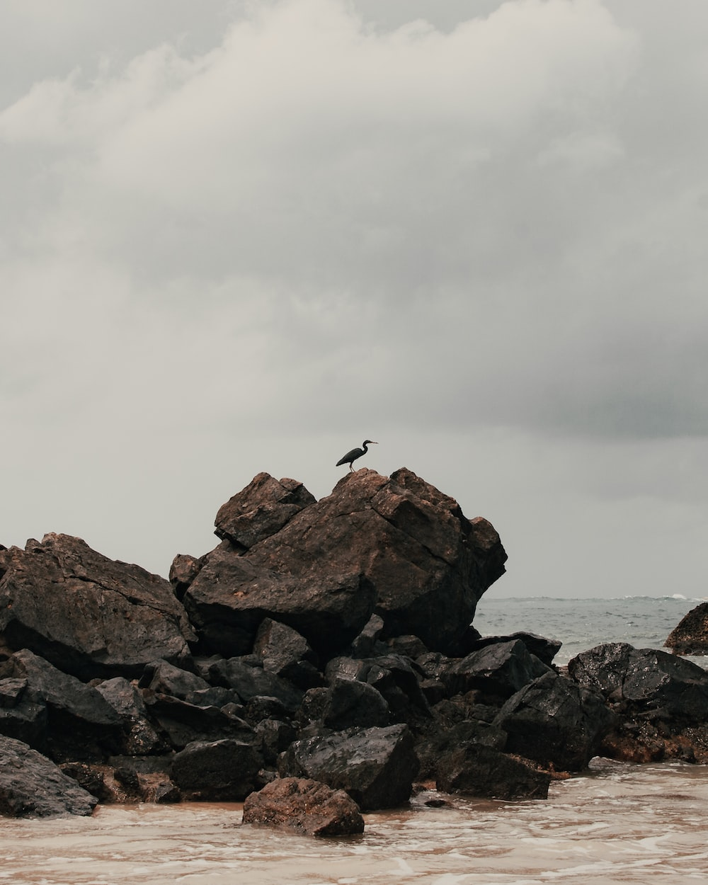 bird flying over the rocky shore during daytime