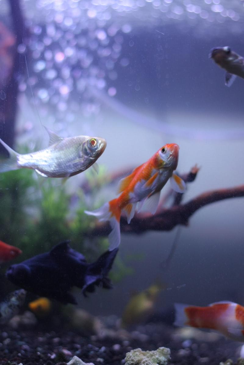 開始養魚(一)