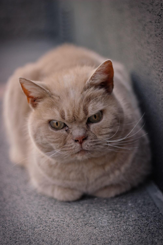 white cat lying on gray textile