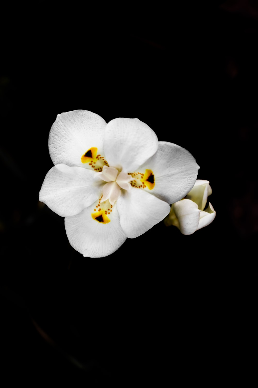 white flower in black background