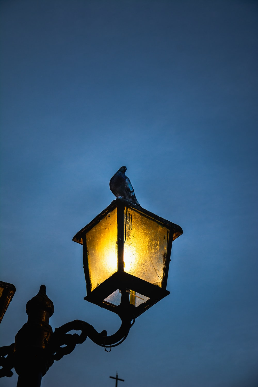 black and yellow street lamp
