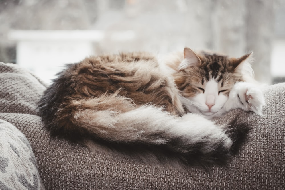 brown and white cat lying on gray textile
