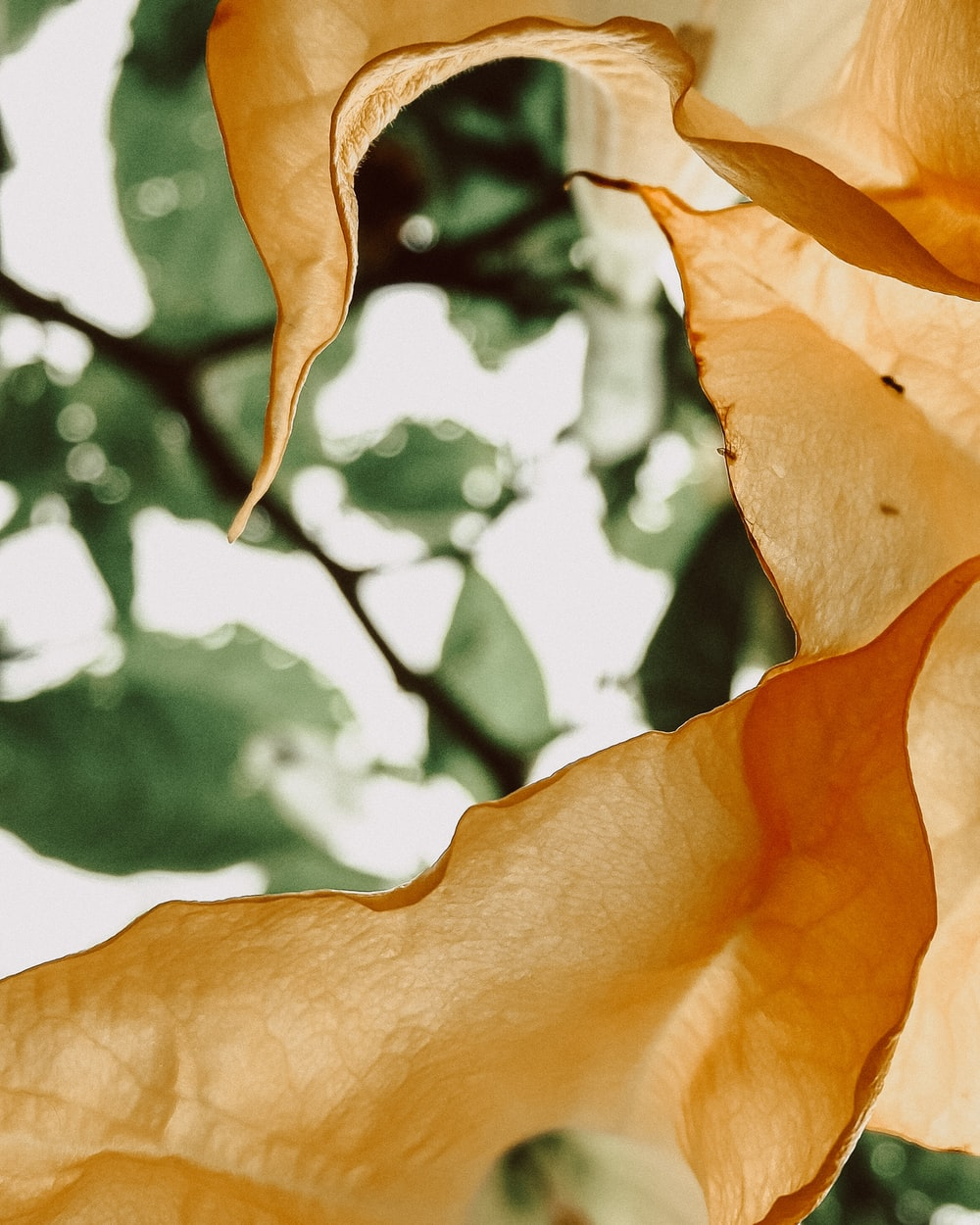 brown leaf in close up photography