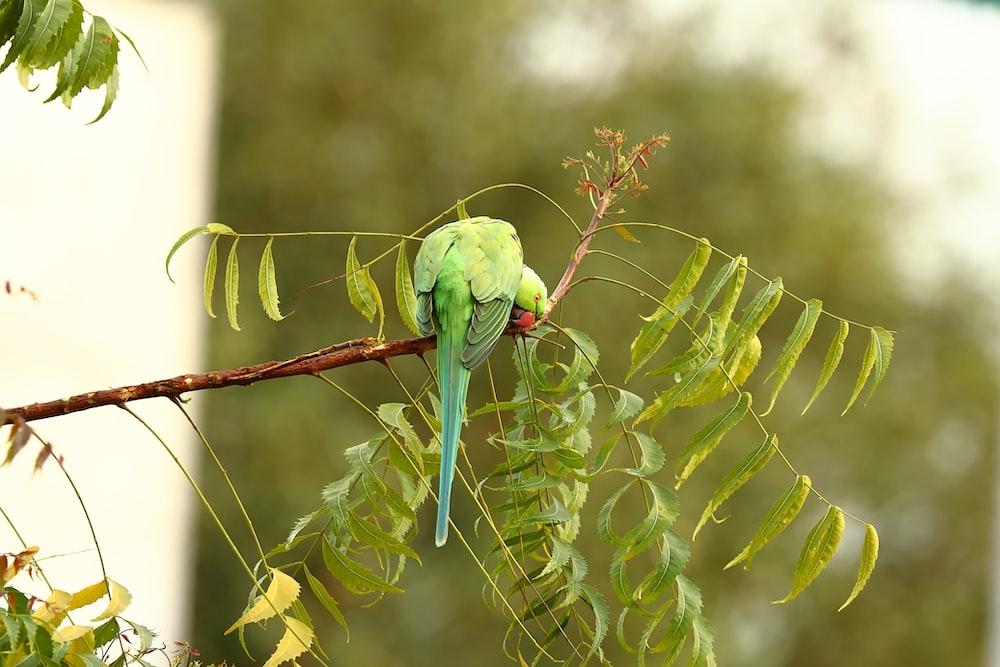 green bird on brown tree branch during daytime
