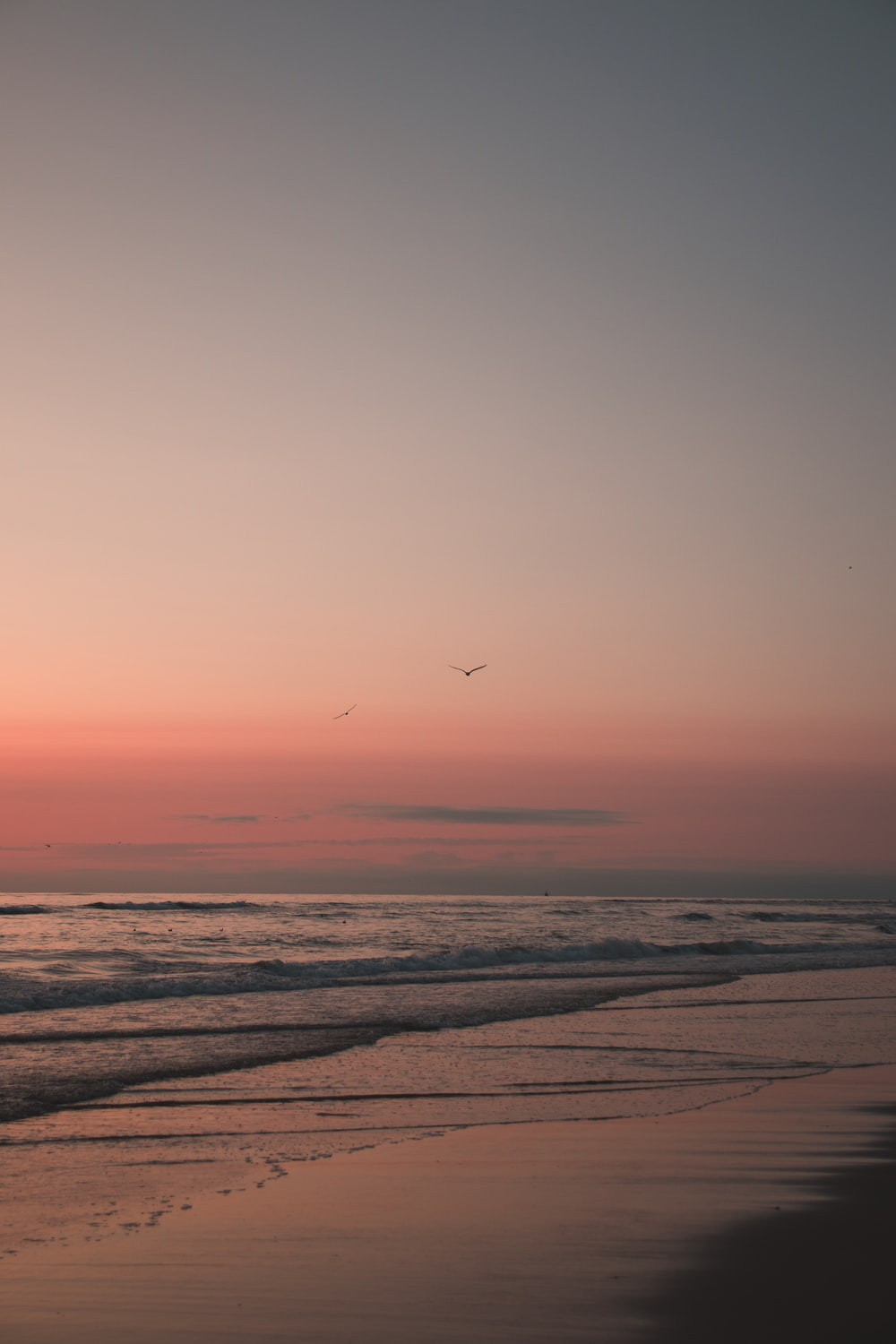 bird flying over the sea during sunset