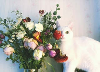 white cat on flower vase