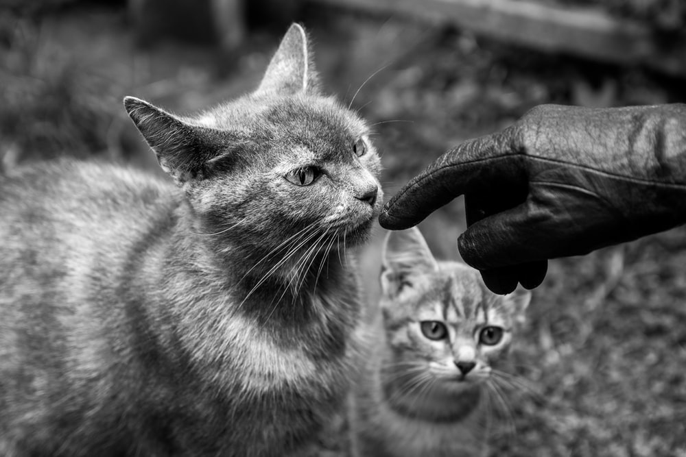 grayscale photo of cat with cat on head