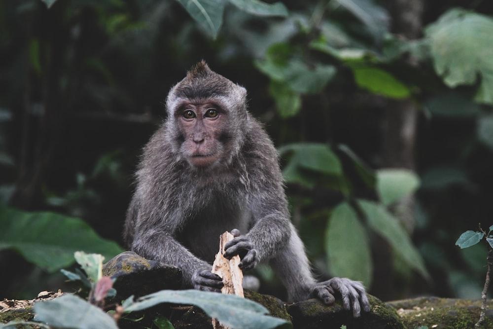 gray monkey on brown tree log during daytime