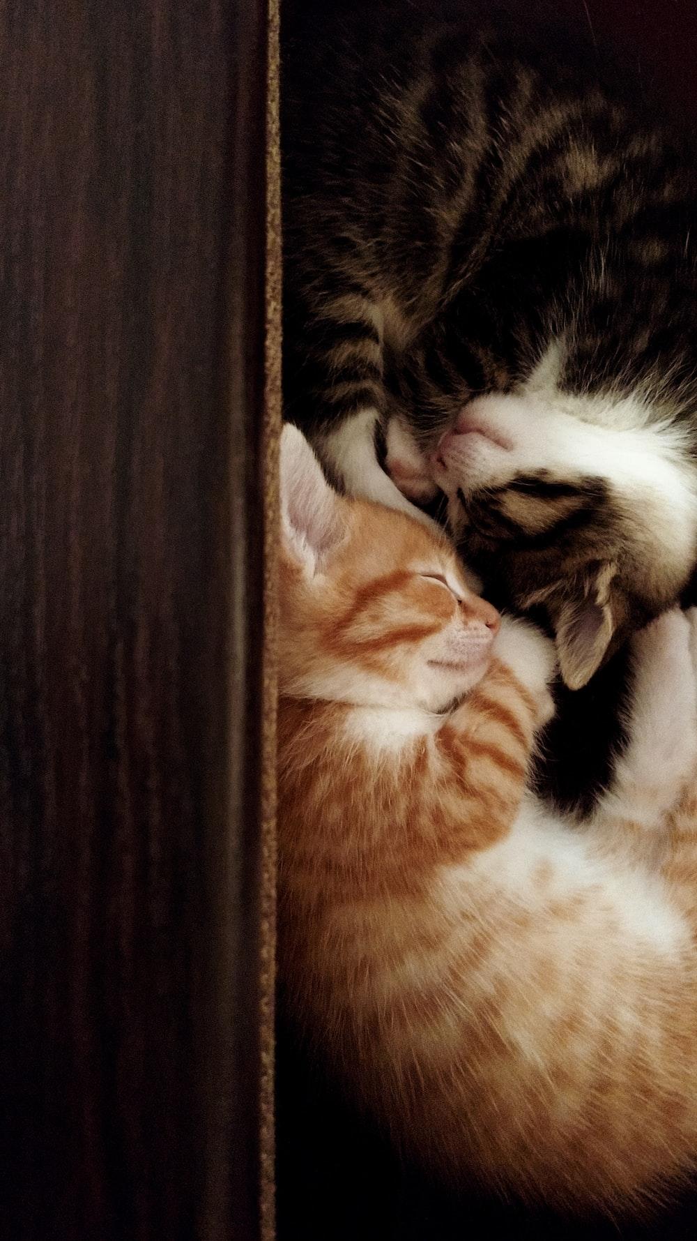Kitten Wallpapers Free Hd Download 500 Hq Unsplash