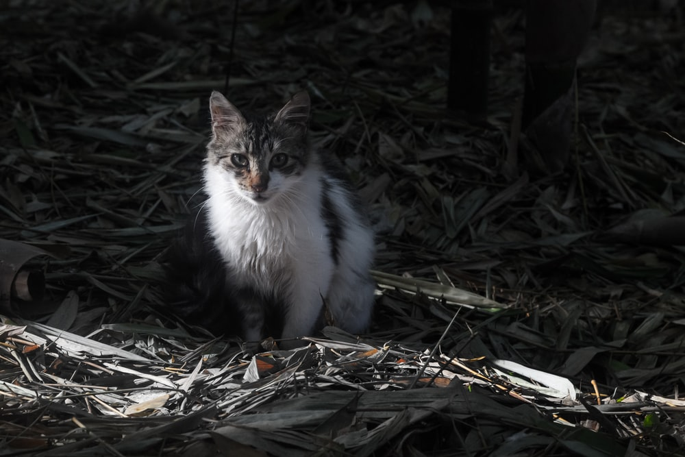 white and black cat on dried leaves
