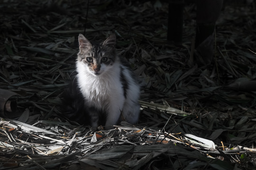 A kitten in the wood staring at me