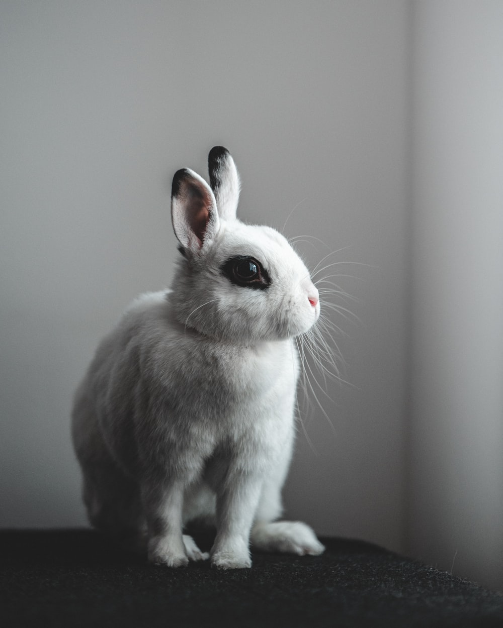 white and gray rabbit on black table