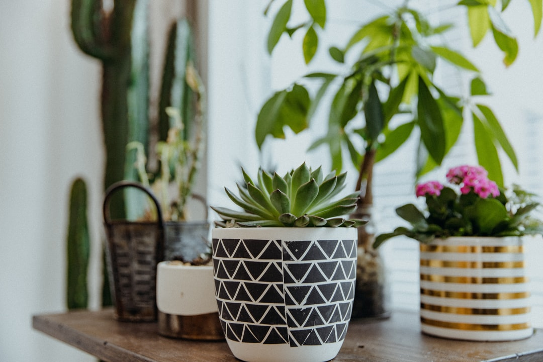 Green Plant In White and Blue Ceramic Pot - unsplash