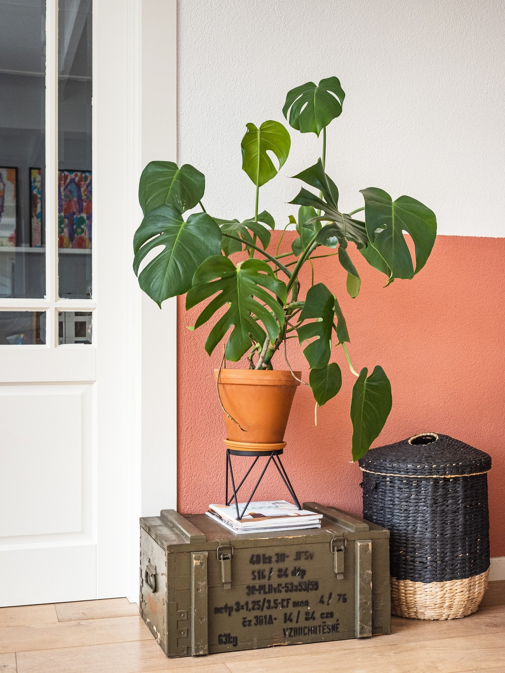green plant on brown clay pot